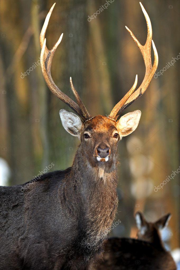Dating service red deer
