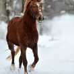 Horse — Stock Photo #2593089