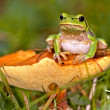 Toad — Stock Photo #2599022