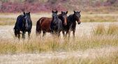 Horse, — Stock Photo