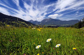 Fields and meadows in Alps — Stock Photo