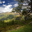 Alpine landscape — Stock Photo #2332725