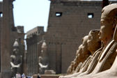 Sphinxes at the temple of Luxor, Egypt — Stock Photo