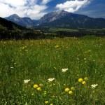 Alpine landscape — Stock Photo