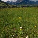 Alpenlandschaft — Stockfoto
