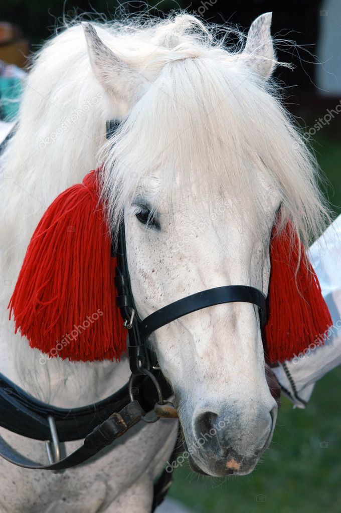Close-up of a horse decorated for ethno festival, suitable to use it as ethno motives and festivals                               Stock Photo #2414982