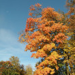 Stock Photo: Autumn trees and sky