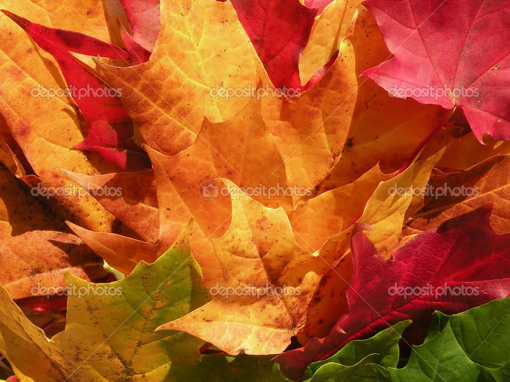 Colourful maple leaves suitable as background — Stock Photo #2237143