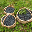Stock Photo: Bilberries