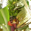 Banana fruits and flower - Stock Photo