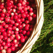 Cowberry — Stock Photo #2290682