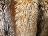 Fox fur for background — Stock Photo