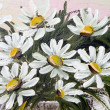Painted marguerite flowers — Stock Photo #2370713