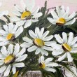 Stock Photo: Painted marguerite flowers