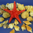 Starfish and shells — Stock Photo