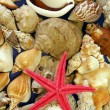 Royalty-Free Stock Photo: Red star fish and shells