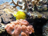 Pink coral and yellow fish — Stock Photo