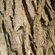 Old bark of tree - Stock Photo