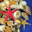 Stock Photo: Shells and fish stars