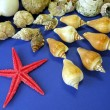 Stock Photo: Shells and red star
