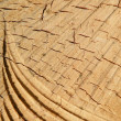 Wooden surface — Stock Photo #2662826