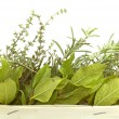 Aromatic herbs isolated — Stock Photo #2408256