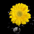 Yellow Gerbera Flower - Foto Stock