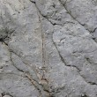 Stone background texture - Foto de Stock