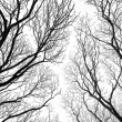Stock Photo: Abstract tree canopy background