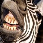 špatná ústní hygiena — Stock fotografie