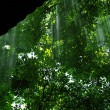 Rays of light  in chestnut forest — Stock Photo