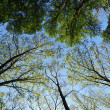 Sky in the forest — Stock Photo