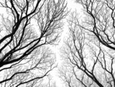 Abstract tree canopy background — Stock Photo