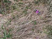 草や花 — ストック写真