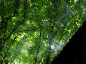 Sun rays in forest — Stock Photo