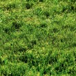 Grass field — Stock Photo #2200070