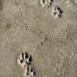 Paw Print — Stock Photo #2200629