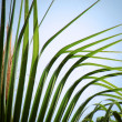 Curved palm leaf against bright blue sky — Stock Photo