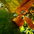 Abstract autumn leaves — Stock Photo