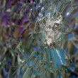 Bulletproof glass - Stock Photo