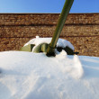 Royalty-Free Stock Photo: Winter tank