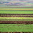 Striped farm land just before winter — Stock Photo
