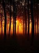 Misty morning in a forest — Stock Photo