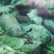 Green rocky seabed difracted water — Stock Photo