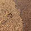 Wave erasing footprint in sand — Stock Photo