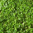 Green forest floor — Stock Photo #2413713