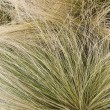 Hair grass background — Stock Photo
