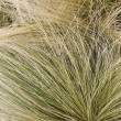 Hair grass background — Stock Photo #2413754