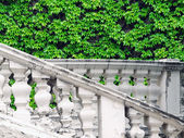 Rustic white stairs with green ivy — Stock Photo