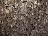 Tree bark close up — Stock Photo